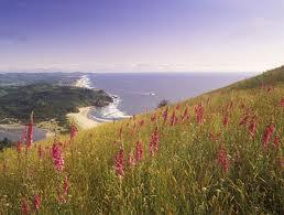 Foxglove on coast