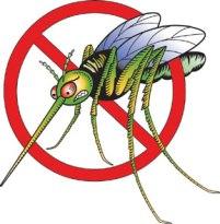 Mosquito no