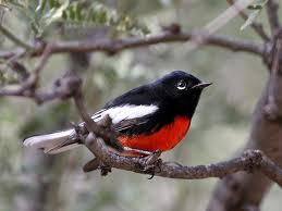 painted red start