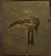 trogon fossil