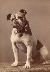 Yale Mascot