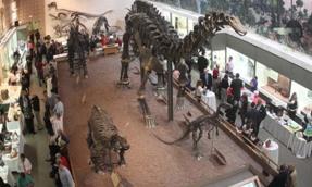 Yale Peobody dynasaur