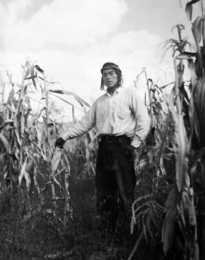 Jem corn