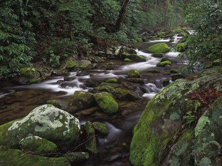 mountain_stream__great_smoky_mountains_national_park__tennessee_us