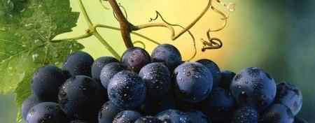 word-for-2009-wineskins