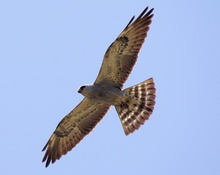 Kite1 May 26 07-L