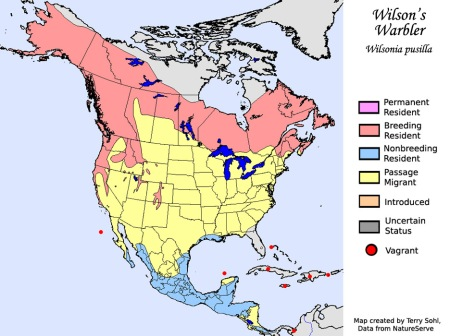 wilsons_warbler_map_big
