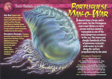 Portuguese_Man-o-War_front