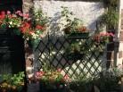 Flowers 1-4
