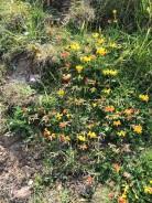 Flowers 1-9