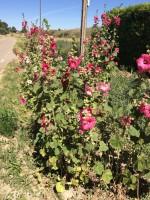 Flowers 10-2