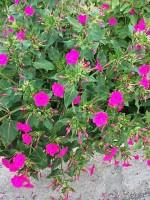Flowers 11-12