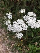 Flowers 2-10