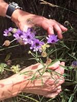 Flowers 3-4