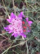 Flowers 3-9