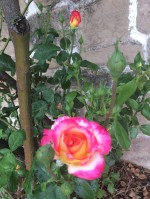 Flowers 6-3