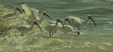 Image result for white ibis painting