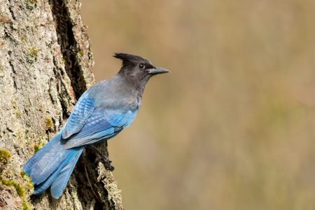 Birdland04