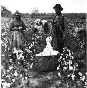 Cotton05